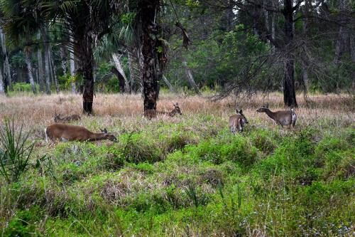Riverbend Park_02-25-2014_6588
