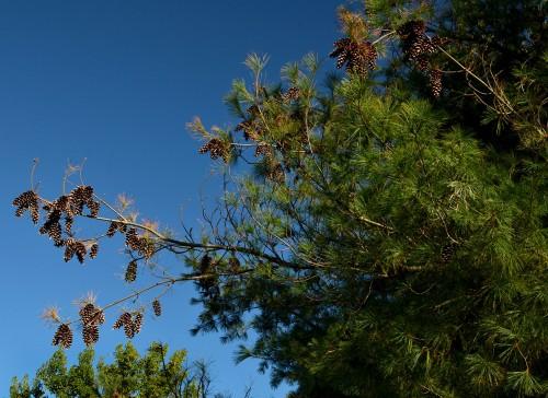 Mary Steinhoff w pine cones 09-14-2014