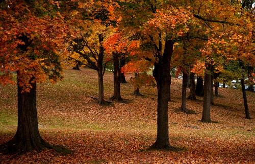 Jackson Park 10-25-2015_1783
